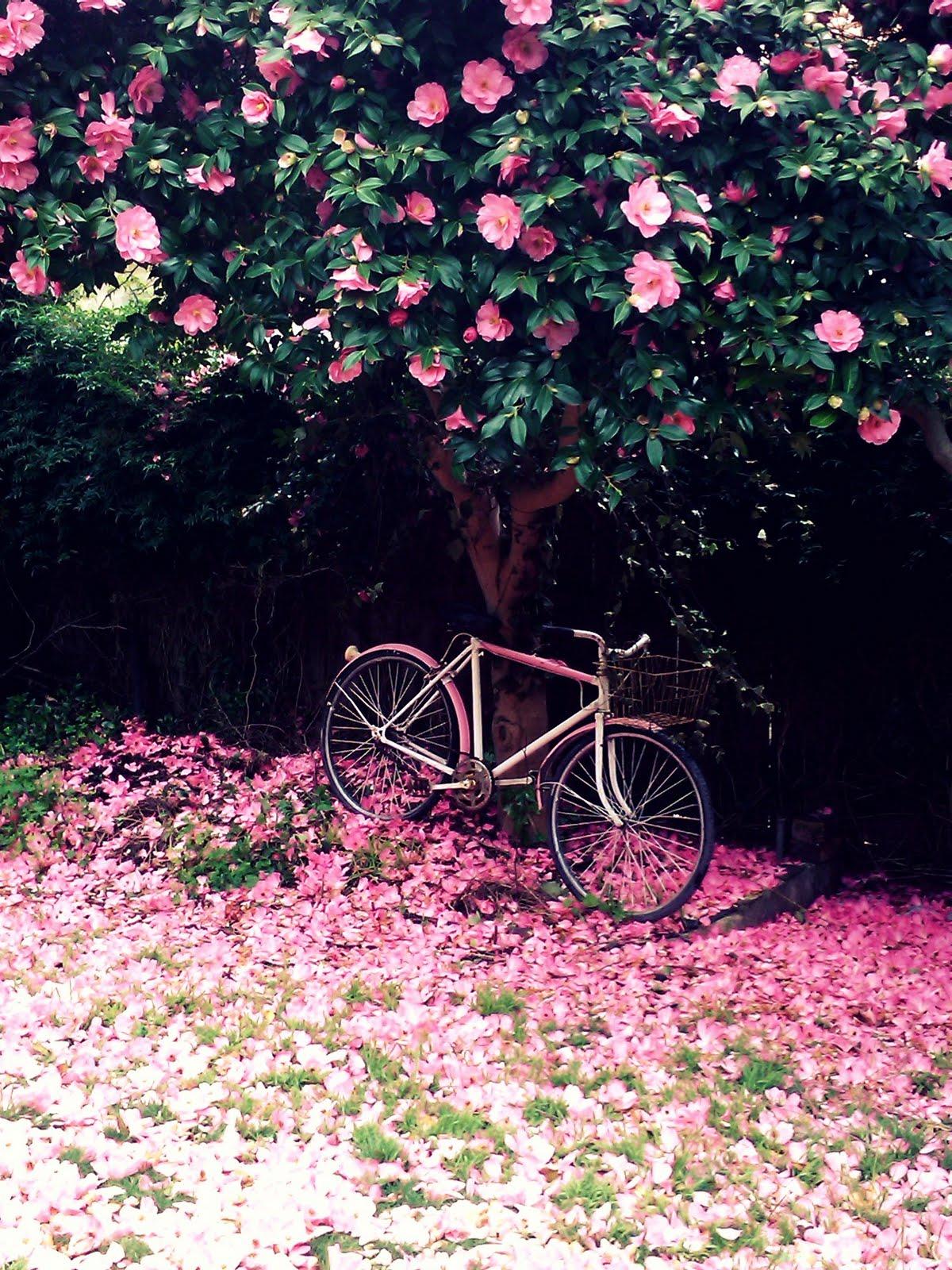 adeline country cottage pink bike flower petals