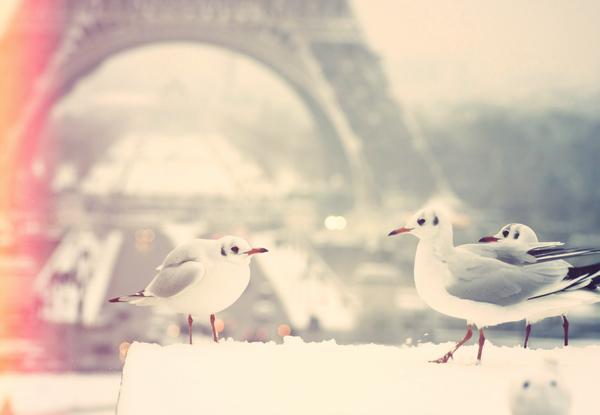 Romantic Parisian winter
