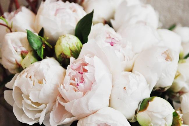 bloom flowers