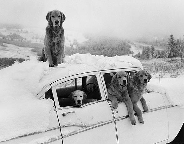 dogs at car